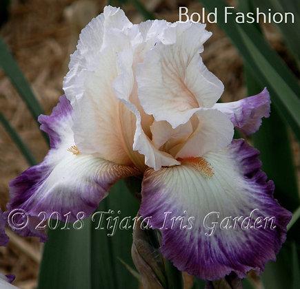 Bold Fashion