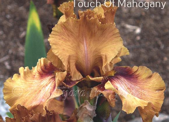 Touch of Mahogany