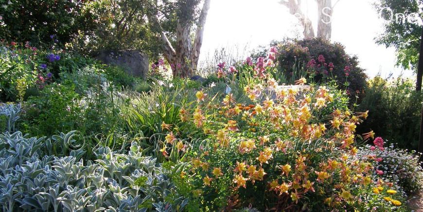 Garden Stage One.JPG