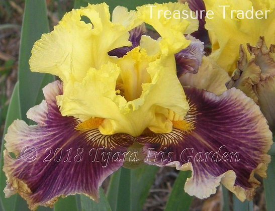 Treasure Trader