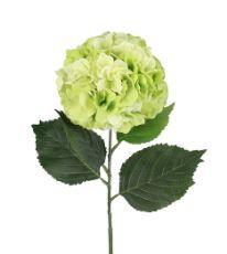 Hydrangea stem Michael's