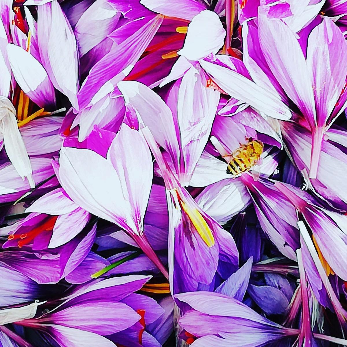 Saffron Workshop