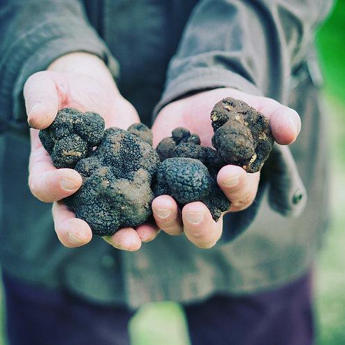 Fresh Summer Black Truffle (Tuber aestivum Vitt.)
