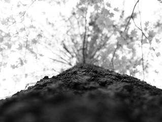 Consulting Arborist Services