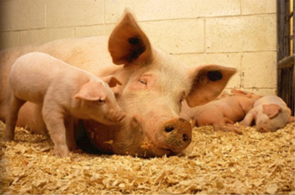 farm-cute-rural-food-farming-livestock-7
