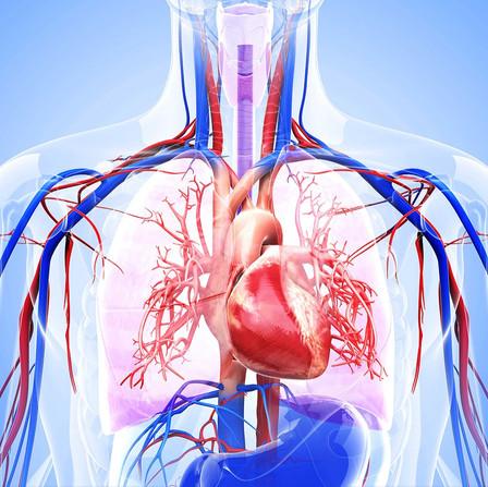 Covid-19 e danni cardiovascolari: qual è la relazione?