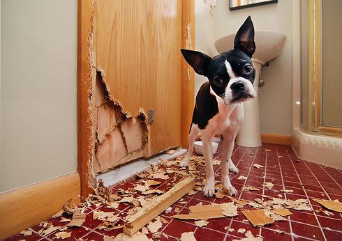 Destructive dog.jpeg
