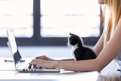 Kitten computer.jpeg
