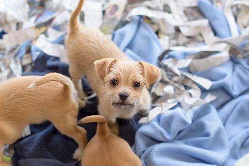 Puppy (017_07456).JPG