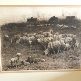 Etching of Sheep (original) by prominent sheep artist John Austin Sands Monks (1850-1917)
