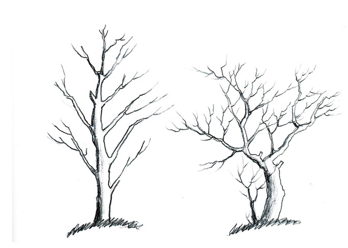 SKETCH - Trees