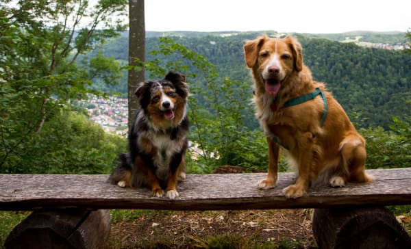 The dogs I'll be looking after in Stuttgart, and the view from the property