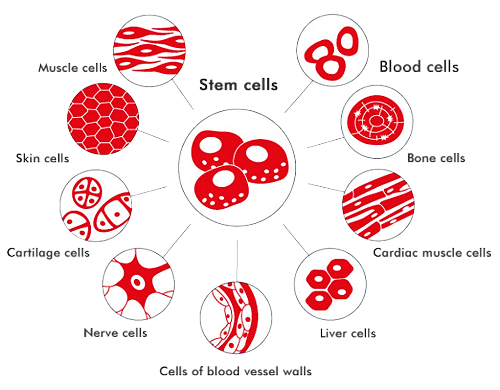 cell-types.png