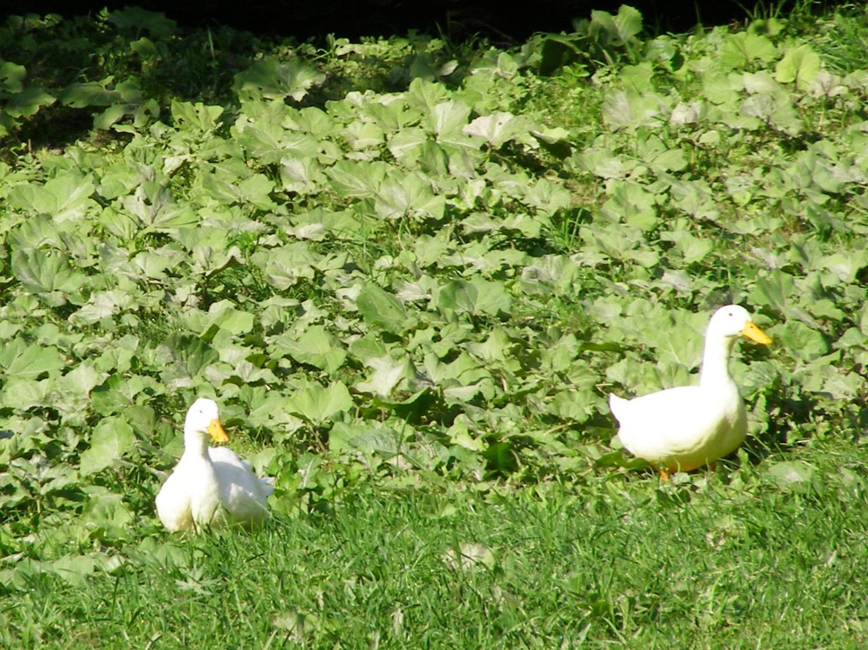 Pond life!