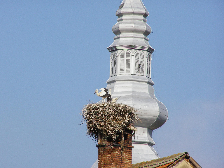 Stork land (Țara Bârsei)