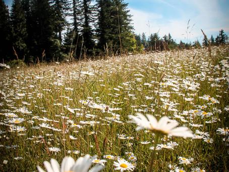 Summer of wildflower