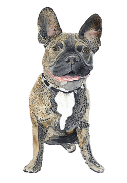 Watercolor Frenchie