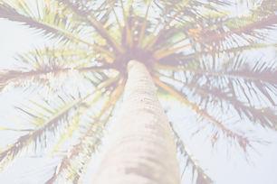 HAN_1081_edited.jpg