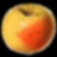 Roxbury Russet Apple