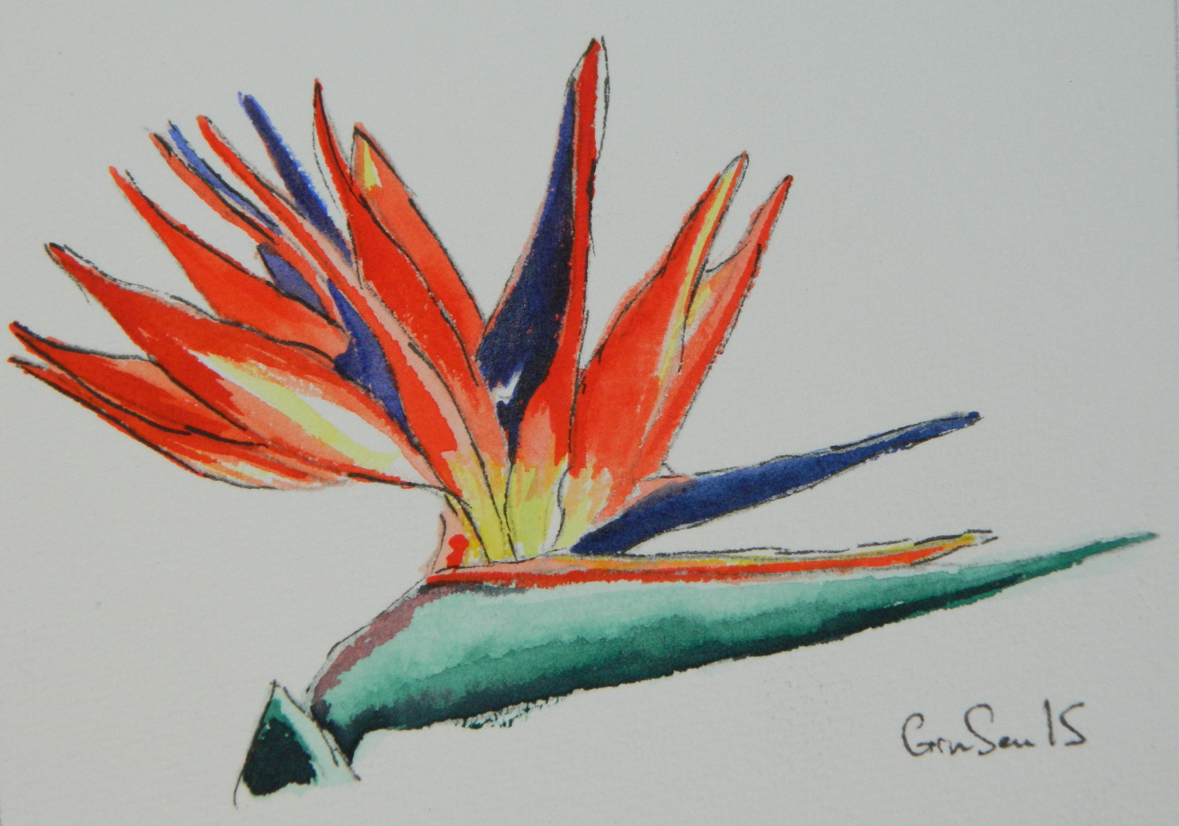 Bird of Paradise, 2015