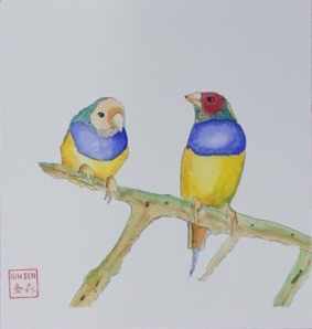Rainbow Gouldians, 2016