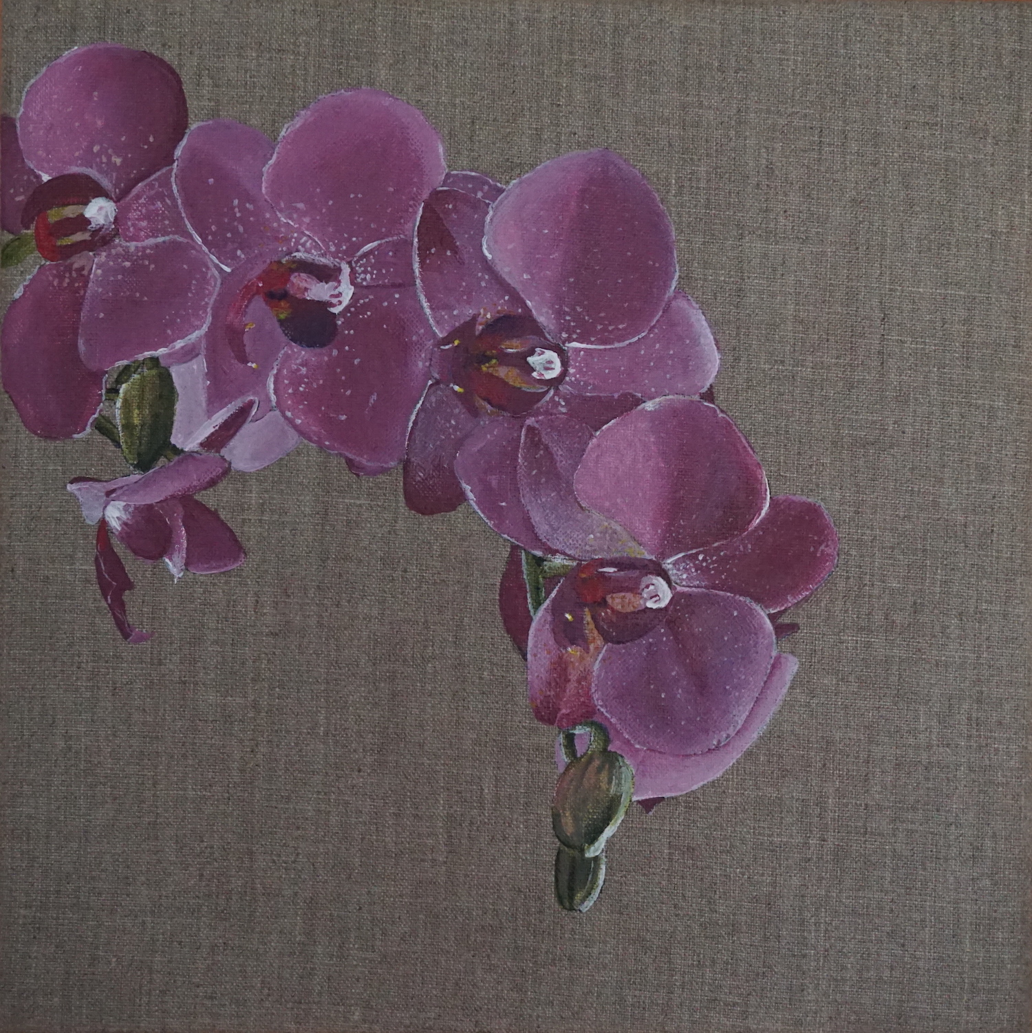 Raw Orchids, 2017