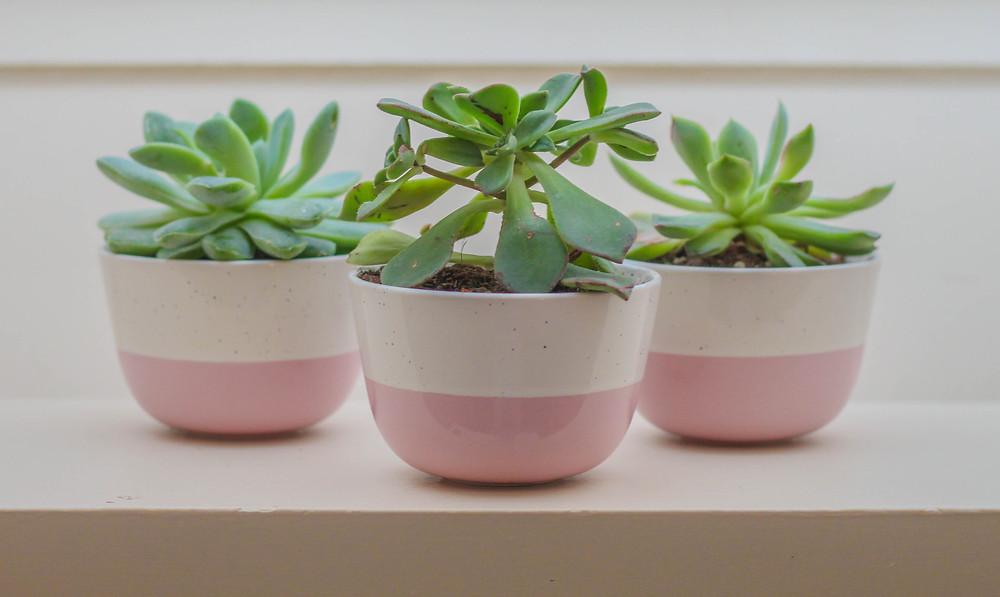 Plantas - Vasos pequenos com suculentas