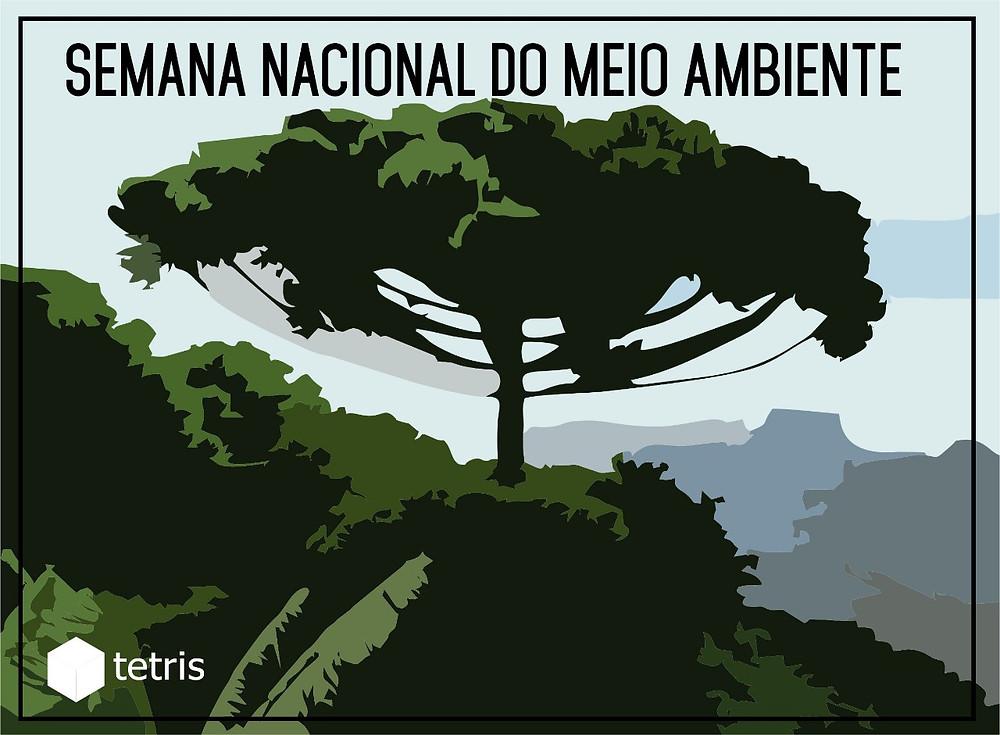 Areas verdes - Araucaria no centro de uma floresta, imagem com tons de azul e verde