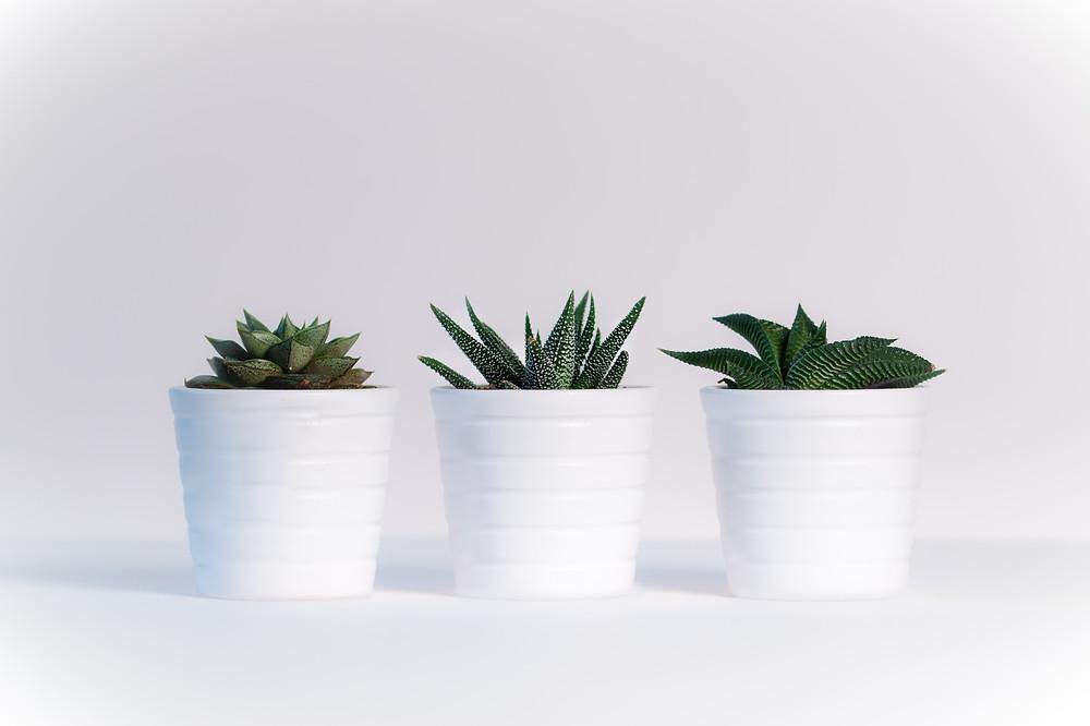 Imovel alugado - Tres pequenas plantas em vasos brancos