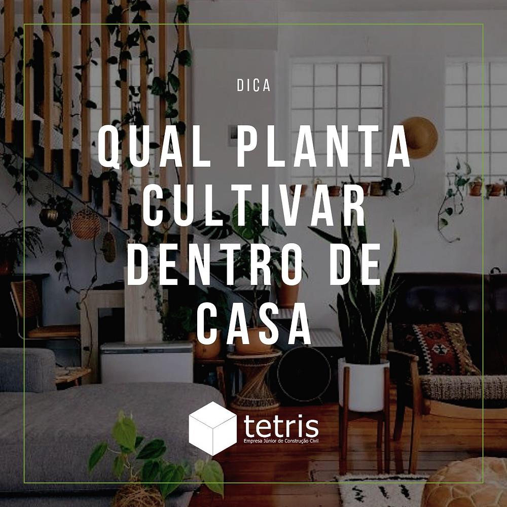 Plantas - Dicas de plantas para cultivar dentro de casa