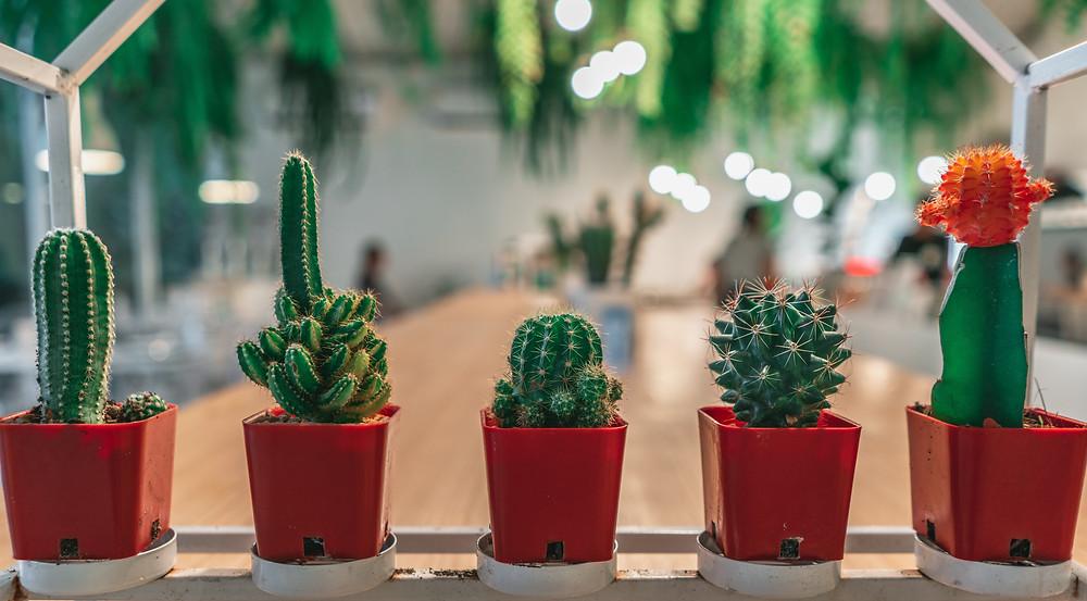 Plantas - Vasos pequenos com cactos