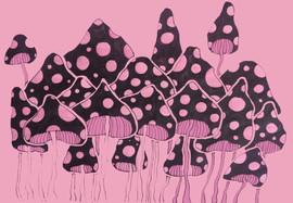 shrooms.jpg