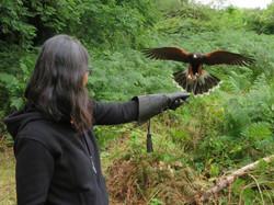 School of Falconry hawk walk Earrach best best series 2017-07-11 308