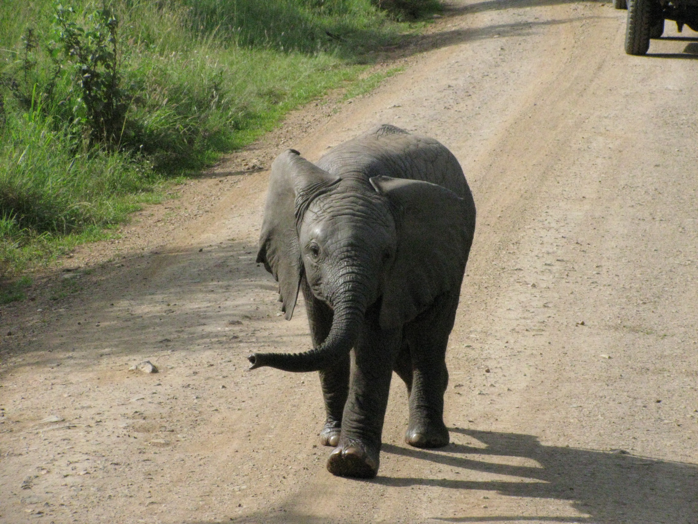 2008 Africa Tanzania safari elephant