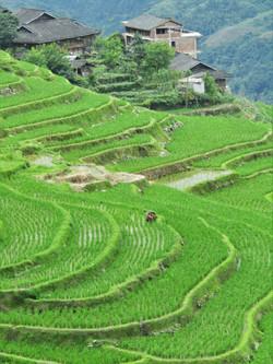 Guilin Longji rice terraces best best 2016-06-29 067