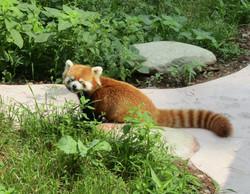 pandas big 2016-07-02 174