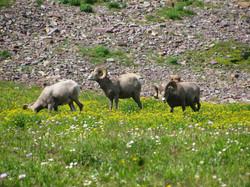 Creatures at Glacier National Park,