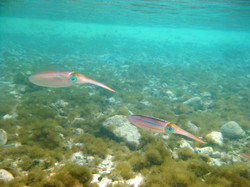 2010 Caribbean cruise 067 snorkel