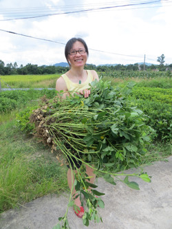 Taishan villages mom cousin Gum picked peanuts best 2016-06-26 005