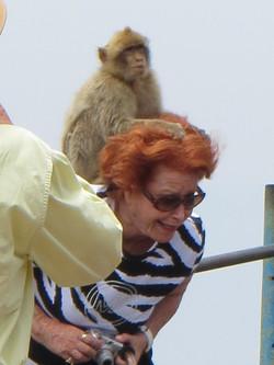 2012 gibraltar monkey attack