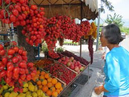 On the road best first cherries Italy 2018 IMG_5634.JPG