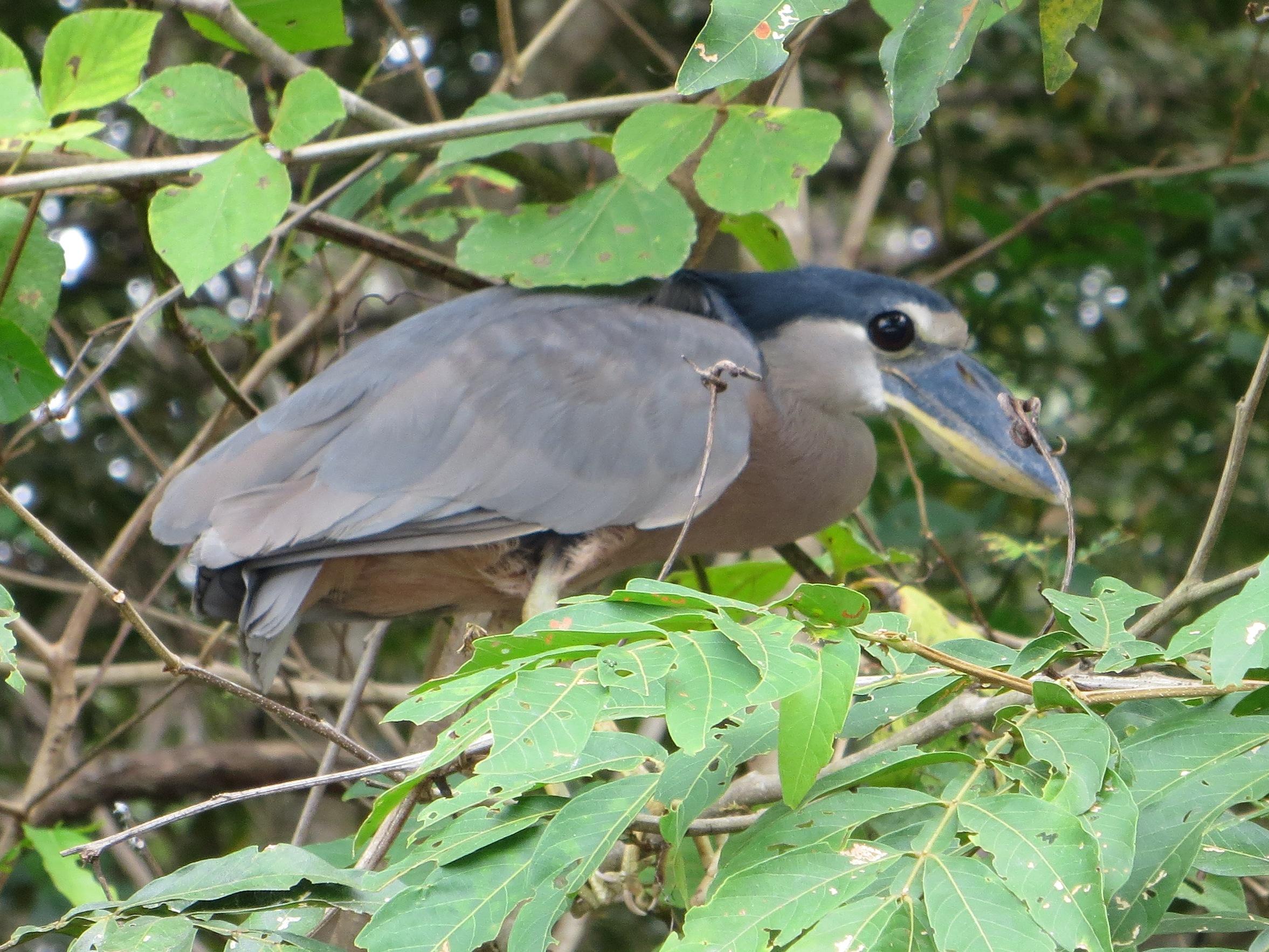 2012 Costa Rica bird