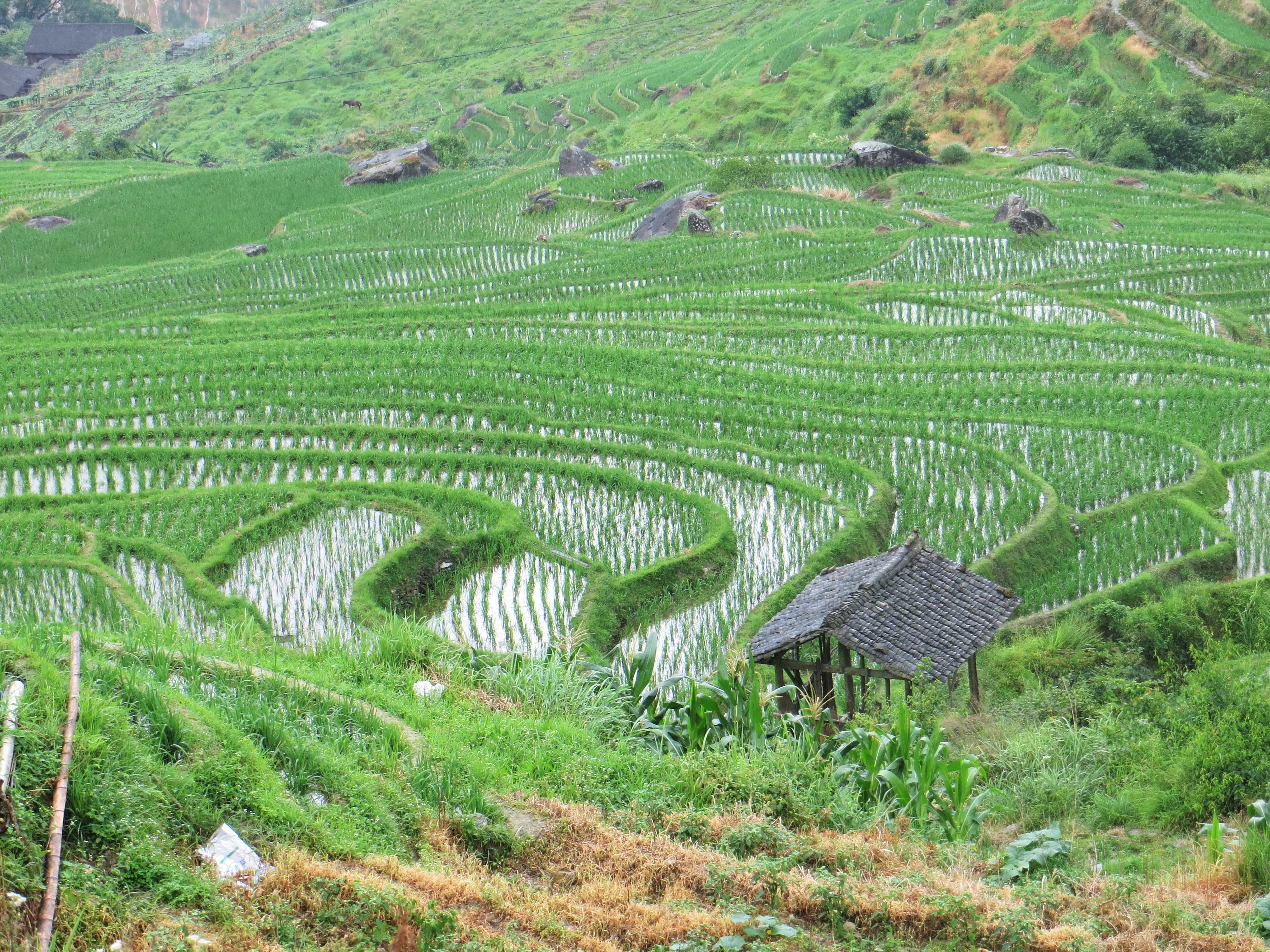 Guilin Longji rice terraces best 2016-06-30 060