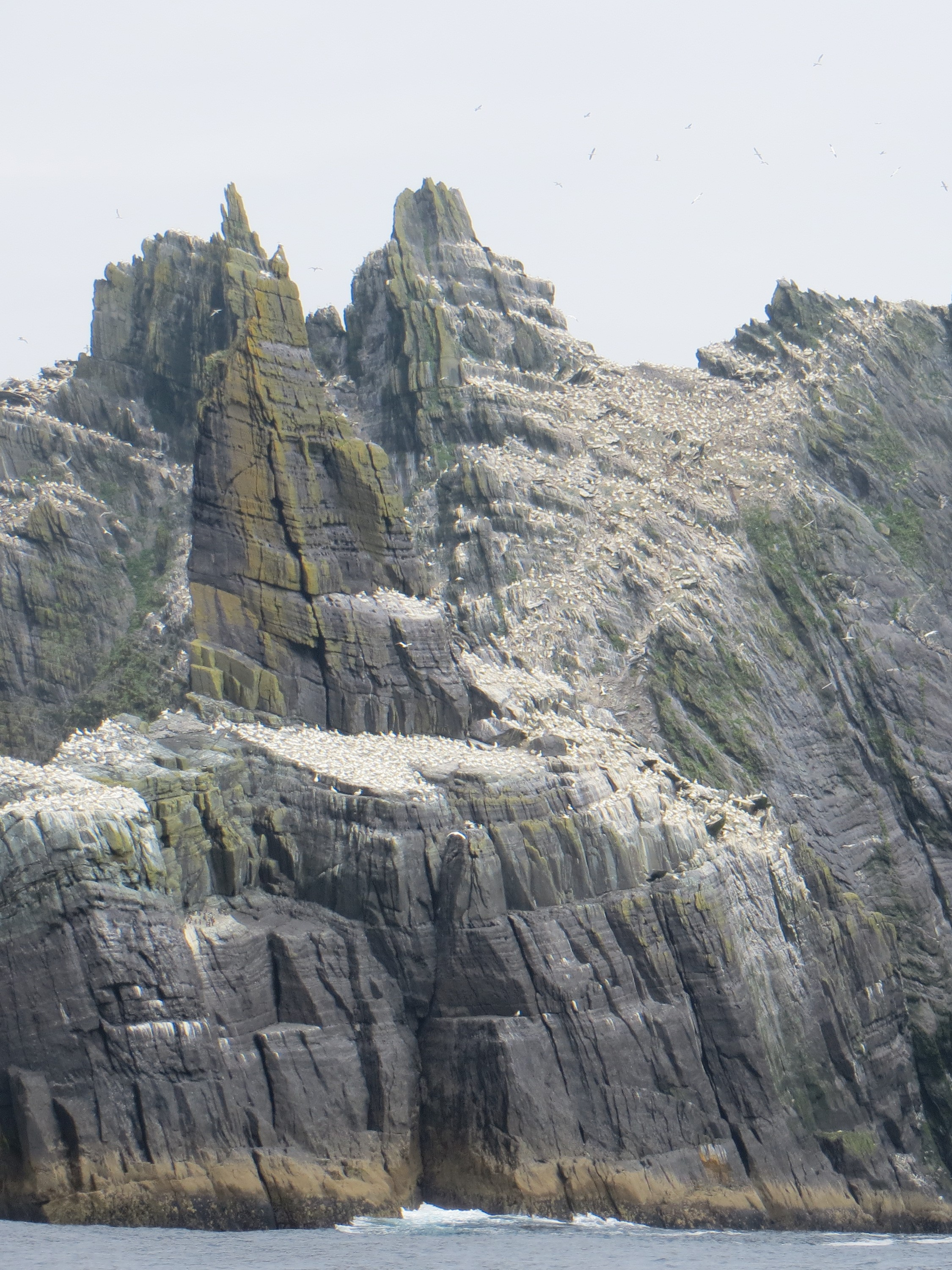 Little Skellig hosts 75,000 breeding gannets, 2nd largest colony after Scotland best IMG_0434