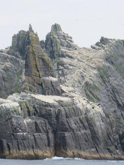 Little Skellig hosts 75,000 breeding gannets, 2nd largest colony after Scotland best IMG_0434