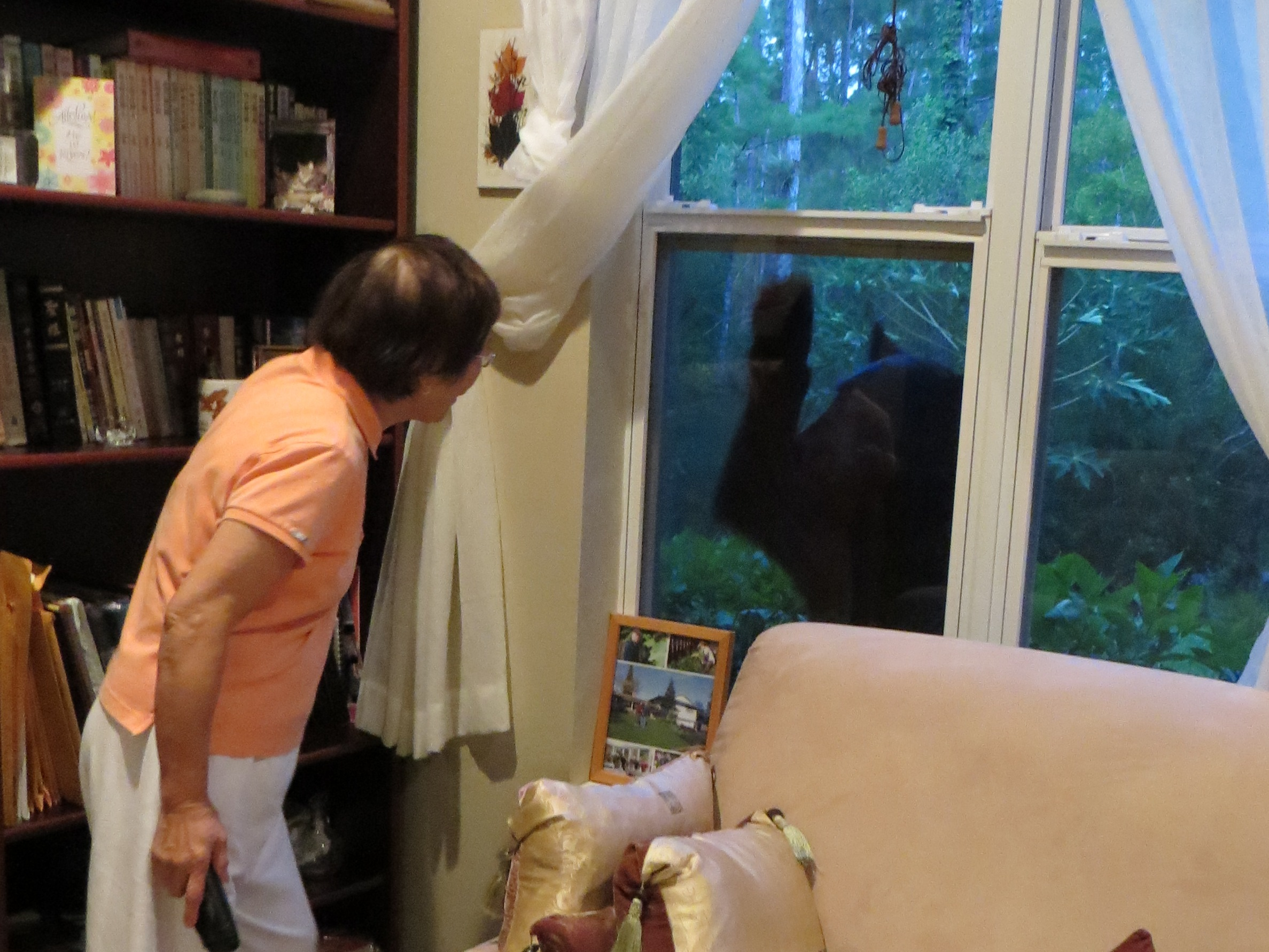 black bear meets grandma 6.14.14