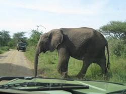 2008 Africa Tanzania elephant safari