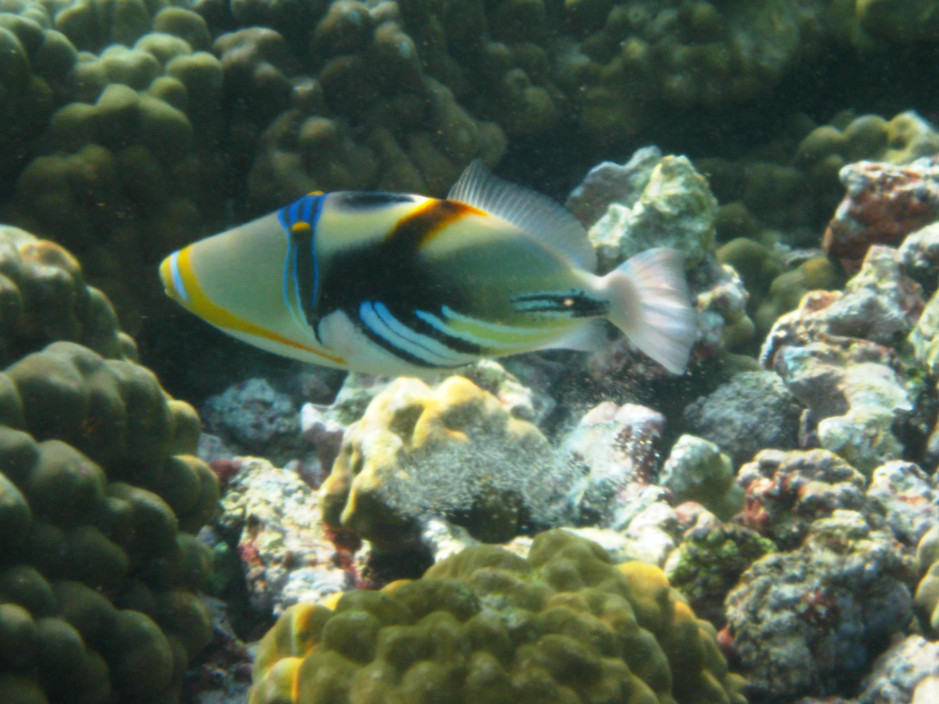 2010 Big Island Kahalu'u Hawaii fish