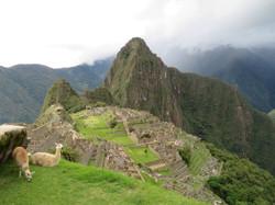 Machu Picchu best with llamas 2017-03-25 200