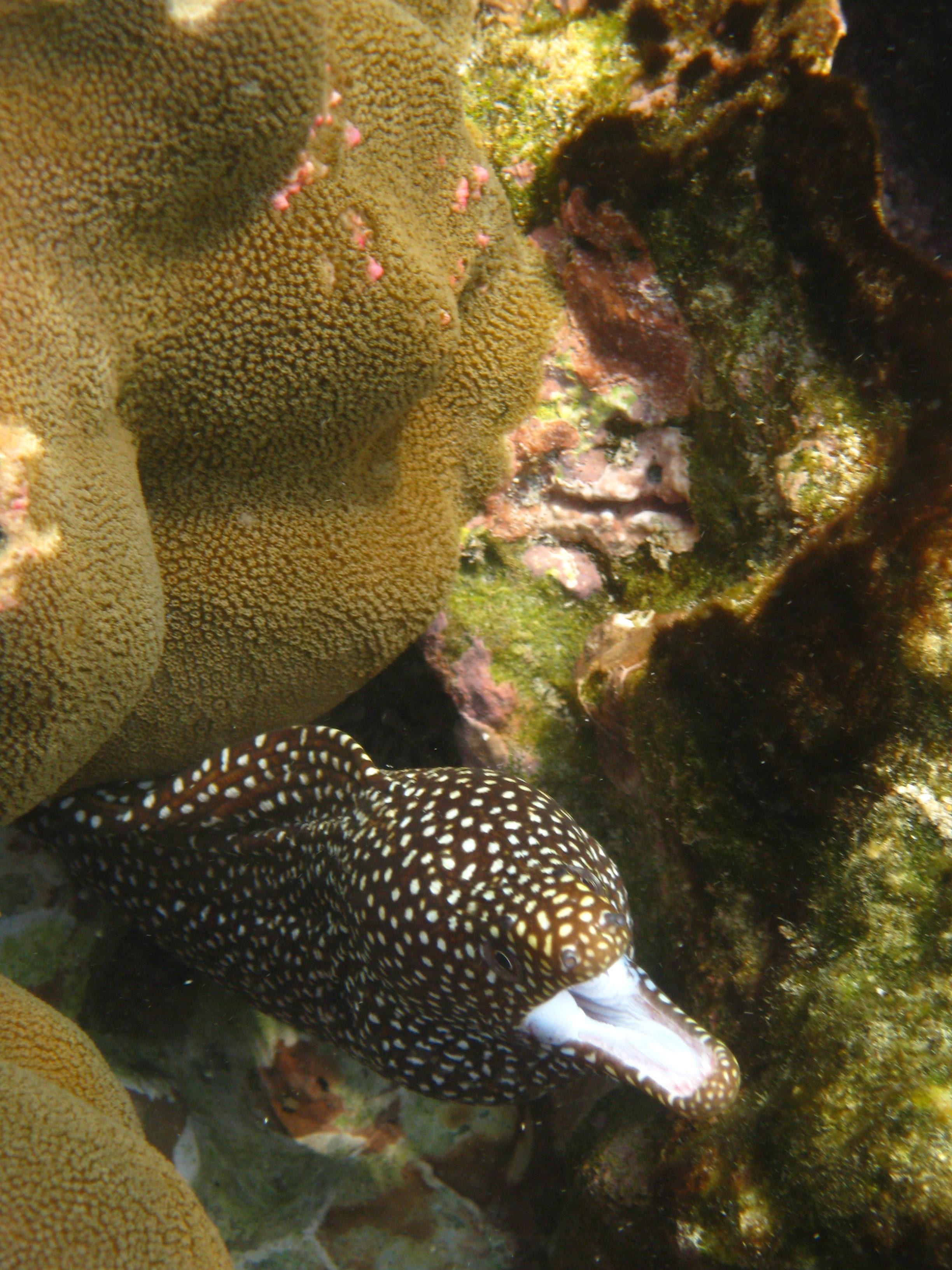 Big Island Kahalu'u  snorkel eel